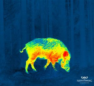 imagen visión térmica caza